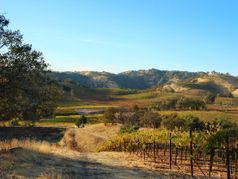 Aloria Vineyards